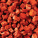 Diced Chinese Chicken(Halal) x1Kg